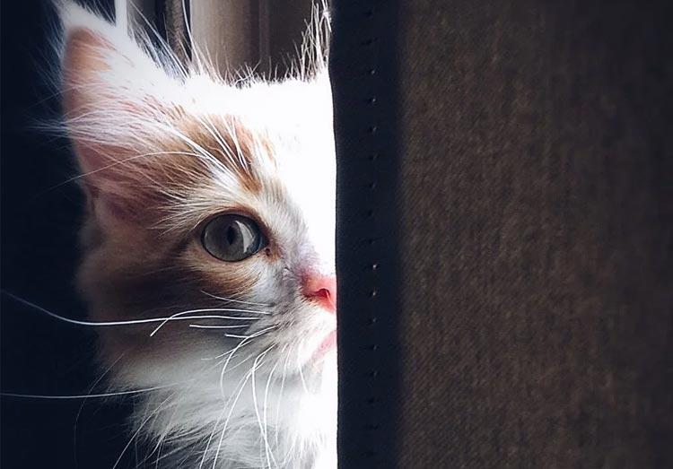 Kitten hiding behind a door