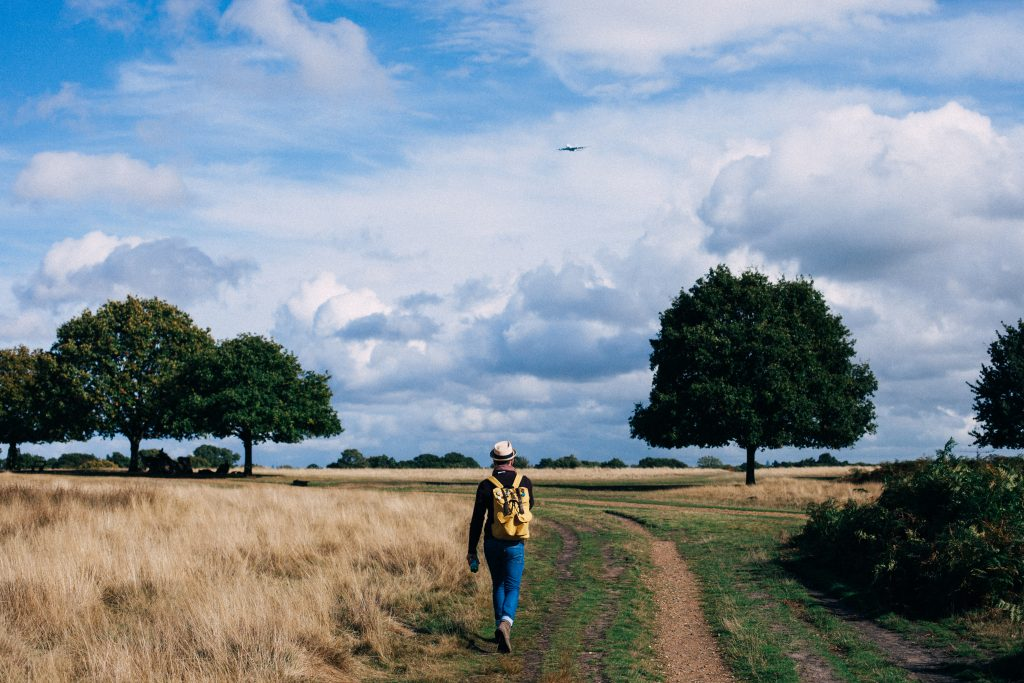 Leisurely Walk In Field